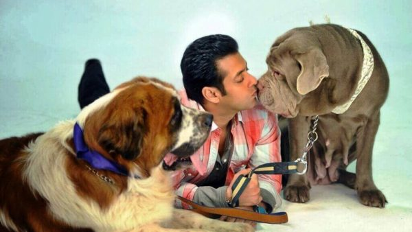 salman khan dogs
