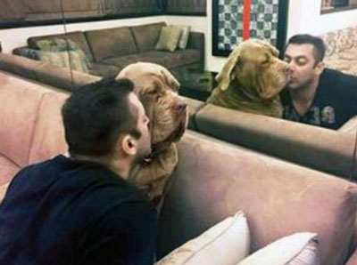 salman khan dogs breed